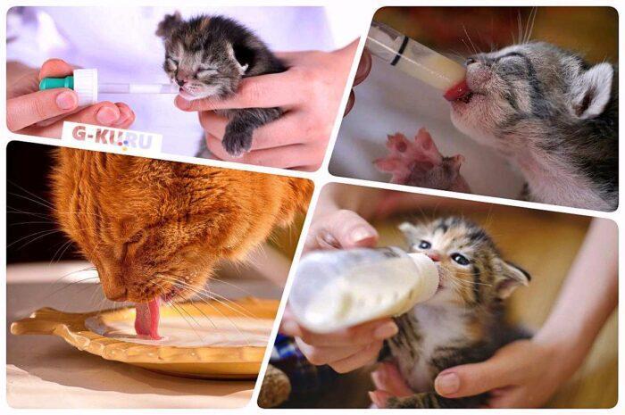 А у нас сегодня кошка Родила вчера котят… А у вас?