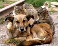 Дети и взрослые откликнулись и помогли бездомным животным в Каменске-Уральском