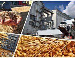 Начал действовать новый порядок учета зерна на Хлебной базе № 65 Каменского городского округа
