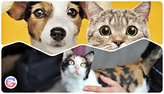 Восемь интересных фактов о кошках, после которых вы полюбите их еще больше