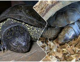 Зимняя спячка черепах в домашних условиях